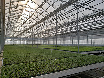 Our Greenhouse Interior